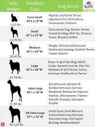 Standard Poodle Size Chart Www Bedowntowndaytona Com