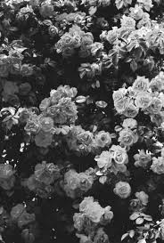 black and white flowers tumblr photography. Fine And Black And White Iphone Wallpaper Tumblr  Buscar Con Google Intended Black And White Flowers Tumblr Photography D