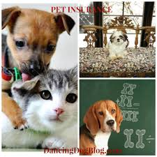 pet insurance what s best