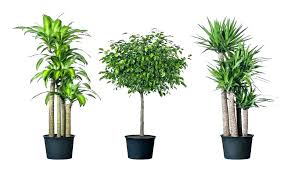 office plants no light. Luxury The Best Indoor Plants For Low Light A Good Plant . Idea Office No