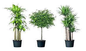 office plants no light. Idea Office Plants No Light