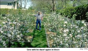 Buy Trees And Learn About Trees  Visit Our Online NurseryGood Trees For Backyard