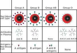 parent blood types chart different blood types chart madebyforay co