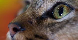 """""""<b>Cat Person</b>"""": the uproar over the New Yorker short story, explained ..."""