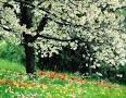 نتیجه تصویری برای انشا فصل بهار