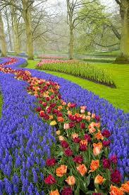 Small Picture Best 25 Tulip garden amsterdam ideas only on Pinterest Dutch