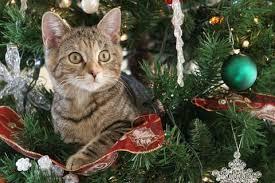 Advent: Verzweiflungstat: Ein Weihnachtsbaum steht Kopf   BRIGITTE.de
