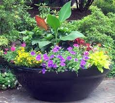 large container gardening best container gardening ideas images on blue large outdoor pot plants uk