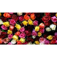 mystic mixed roses bunch gifts to kerala send gifts send flowers rose bouquet