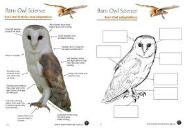 Small Picture Barn Owl colouring page The Barn Owl Trust