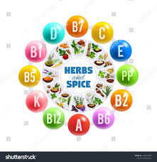 Vitamins A To Z Chart Vitamins Minerals Fresh Herbs Spices Vector Royalty Free