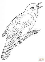 Small Picture Common Nightingale coloring page Free Printable Coloring Pages