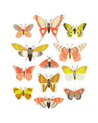 Moth Identification Chart Moth Identification Chart Available For Sale Www Etsy Com