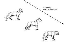 Understanding Your Dog For Dummies Cheat Sheet Dummies