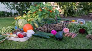 vegetable gardening for beginners books