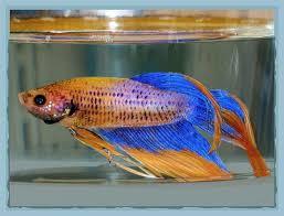 petsmart animals fish. Fine Petsmart Petsmart Pet Stores Review 6844 Inside Animals Fish S