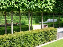 Plant A Formal Hedge Hgtv Formal Garden Plants