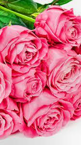 Pink Rose iPhone Wallpapers - Wallpaper ...