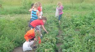 chuck fleming memorial school garden grants