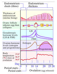Lh Levels Chart Menstrual Cycle Phases Mymonthlycycles