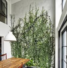 Architect Visit: A Dining Room Wallpapered with Climbing Vines in Brooklyn. Interior  PlantsInterior ...