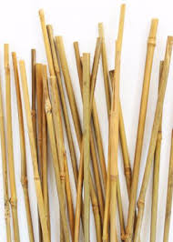 bamboo garden stakes. Wonderful Bamboo To Bamboo Garden Stakes R