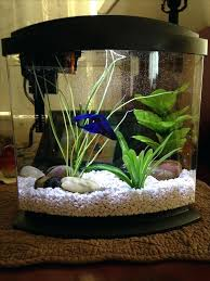 fish tank divider 5 gallon this is the tank i bought for my fish sushi its gallons