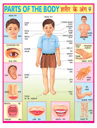 Ibd Pre School Durable Parts Of Body Pvc Educational Laminated Wall Chart Poster
