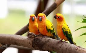 love bird wallpaper hd love hd wallpapers free wallpaper s