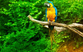 Parrot Live Wallpaper for Android - APK ...