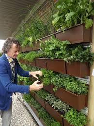 herb wall planter growing food in vertical garden wooden wall herb garden herb wall