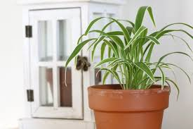 the 10 best low light houseplants new