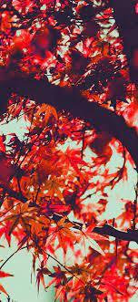 mx13-fall-tree-leaf-autumn-nature ...