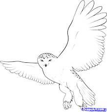 Small Picture how to draw a snowy owl step 9 art Pinterest Snowy owl Owl
