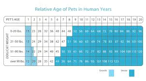 Dog Years Conversion Chart 49 Unmistakable Kitten Growth Chart Weight