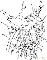 Obsession Bird Nest Coloring Page Wren Build A Gif 1862 2382 Adult