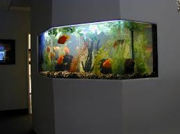 fish tank for office. coffee tables dazzling formidable fish tank for home images conceptst tanks in the office on table unique designs of aquarium inhabit zone