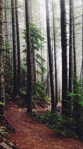 Forest Woods Path Pine Trees #iPhone #6 ...