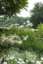 best ideas about herons blue heron beautiful we are diving into this cottage wild flowers and trim and pick some weeds here we have iris ensata great white heron astilbe euphorbia diamond frost