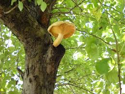 mushrooms a photo essay deepthoughtsonrandomstuff open in pop up window