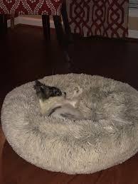 tj maxx dog beds.  Maxx Tj Maxx Dog Beds 1  Inside