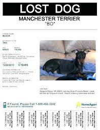 Lost Pet Poster Template Found Dog Poster Template Beauteous Lost