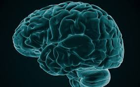 Image result for google images human brain