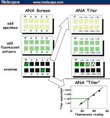 Ana Titer And Pattern Gorgeous AACC 48 Issues In Immunodiagnostics Symposium Highlights
