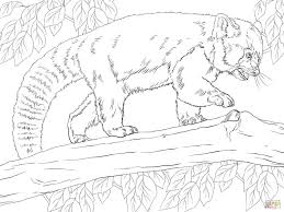 Small Picture Coloring Pages Animals Realistic Red Panda Coloring Page Panda
