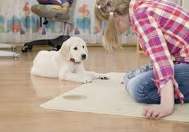 no matter how well trained your dog is and how diligently you keep to your potty break schedule sometimes happens whether on the carpet