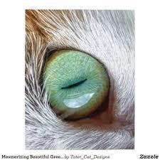 Eye Cat Design Mesmerizing Beautiful Green Cats Eye Jigsaw Puzzle Zazzle