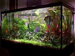 Natura acquario vendita pesci acquari e accessori a parma.