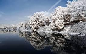 Hintergrundbilder Japan Küste Fluss Stein Bäume