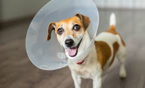 diy e cones dogs have a pretty universal reaction to wounds itches and assorted types of skin irritation they lick or chew the area to clean it and